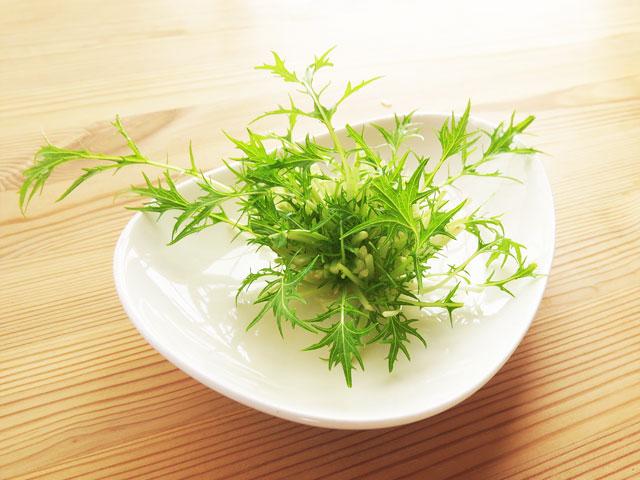 水菜の根っこ栽培